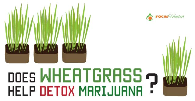 wheatgrass marijuana detox