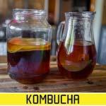 kombucha starter guide